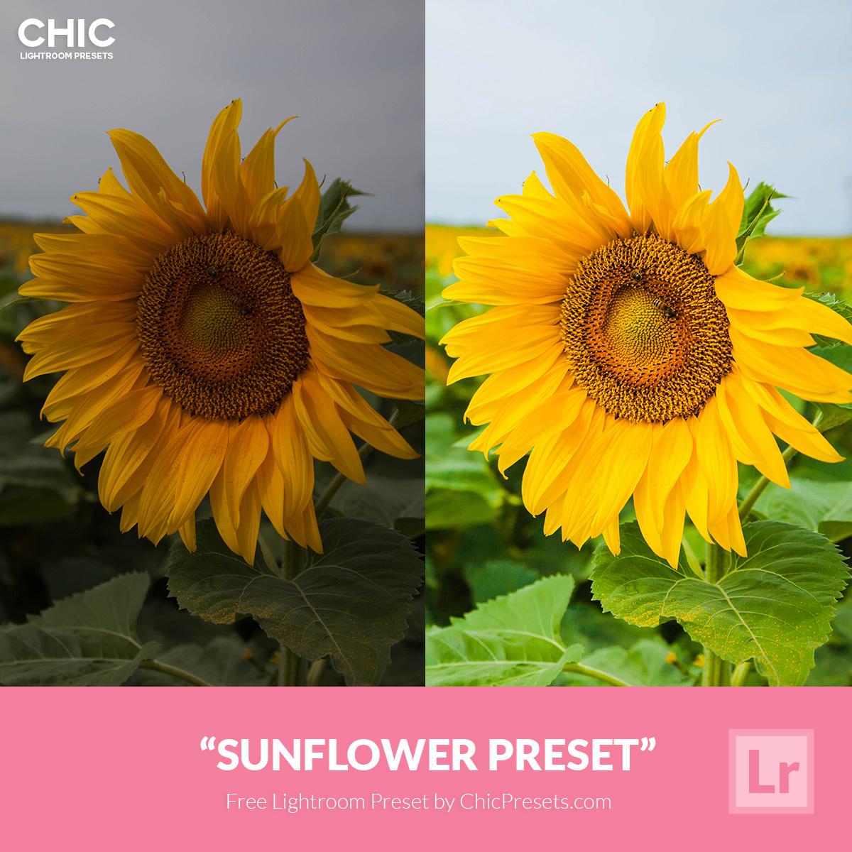 Free-Lightroom-Preset-Sunflower-