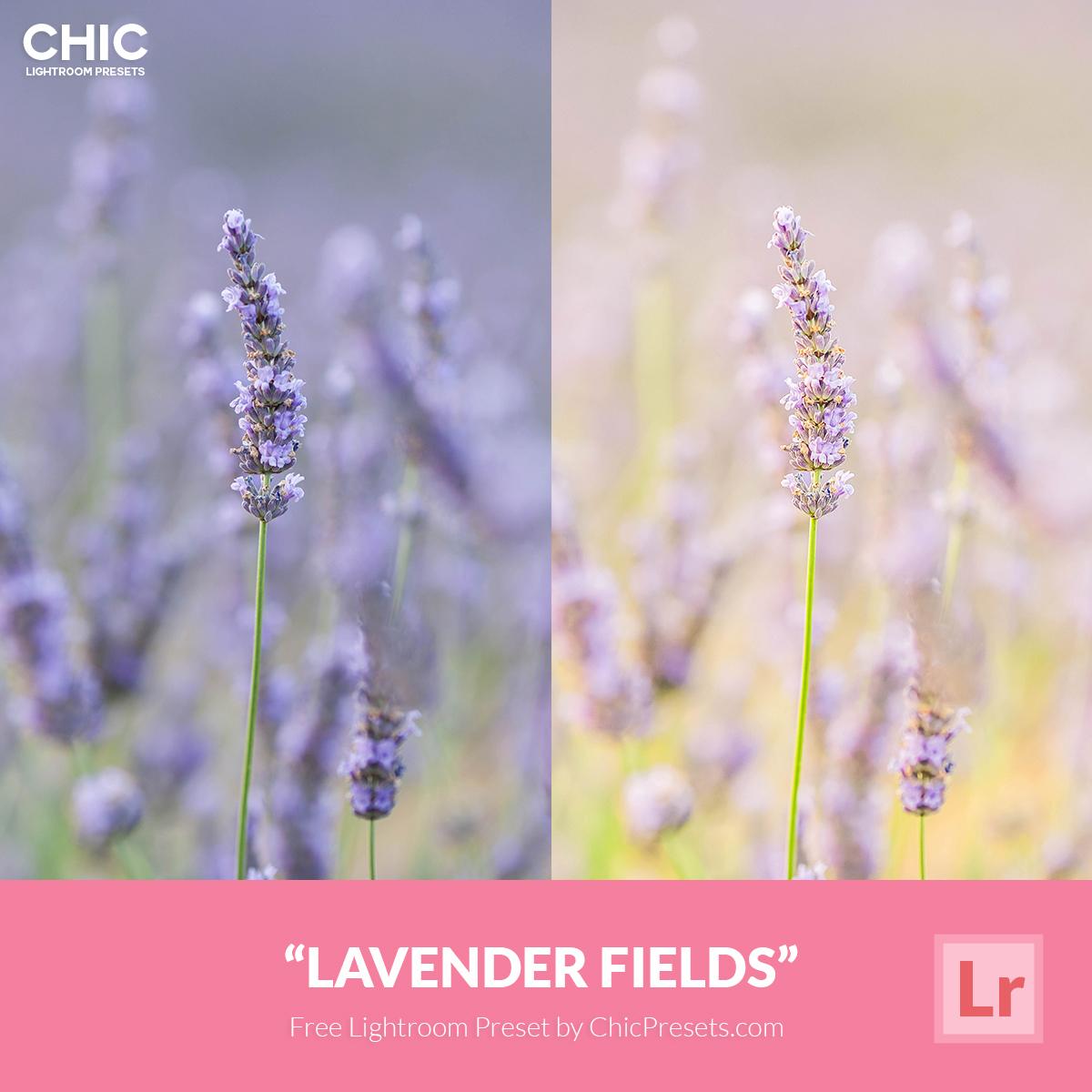 Free Chic Preset Lavender Fields 4